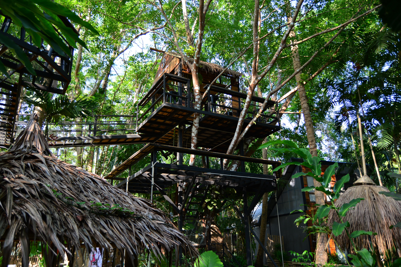 baan ton mai the tree house cafe krabi