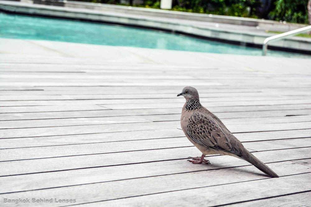 bird pool grand hyatt erawan bangkok