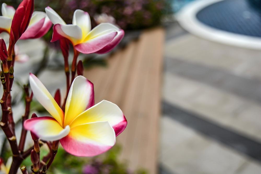 flower pool Berkeley Hotel Pratunam bangkok